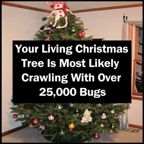 do real christmas trees have bugs your living tree is most likely crawling with 25 000 bugs