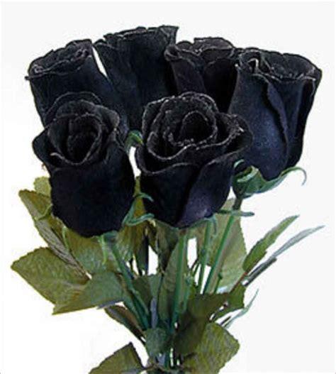 imagenes de rosas negras image gallery imagenes de rosas negras