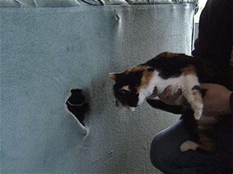 gatti divani gatto ritrovato dentro un divano di seconda mano l
