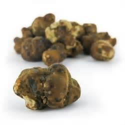 Magic truffles mexicana