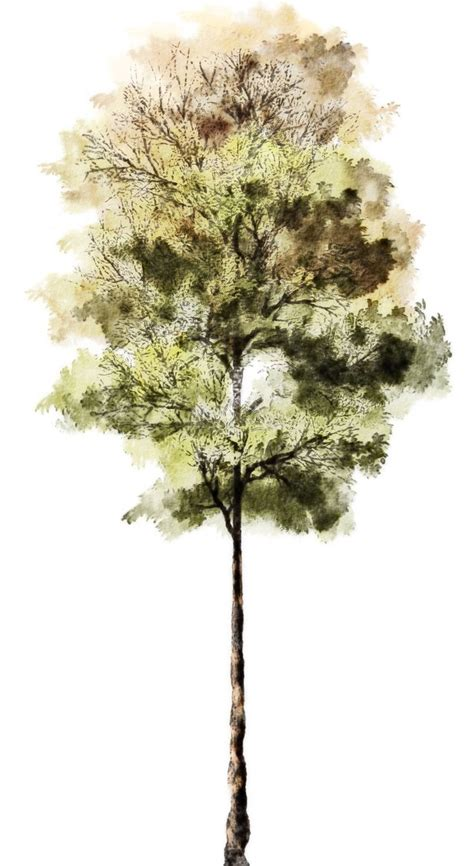 tree architecture drawing 57 best for rendering plant images on
