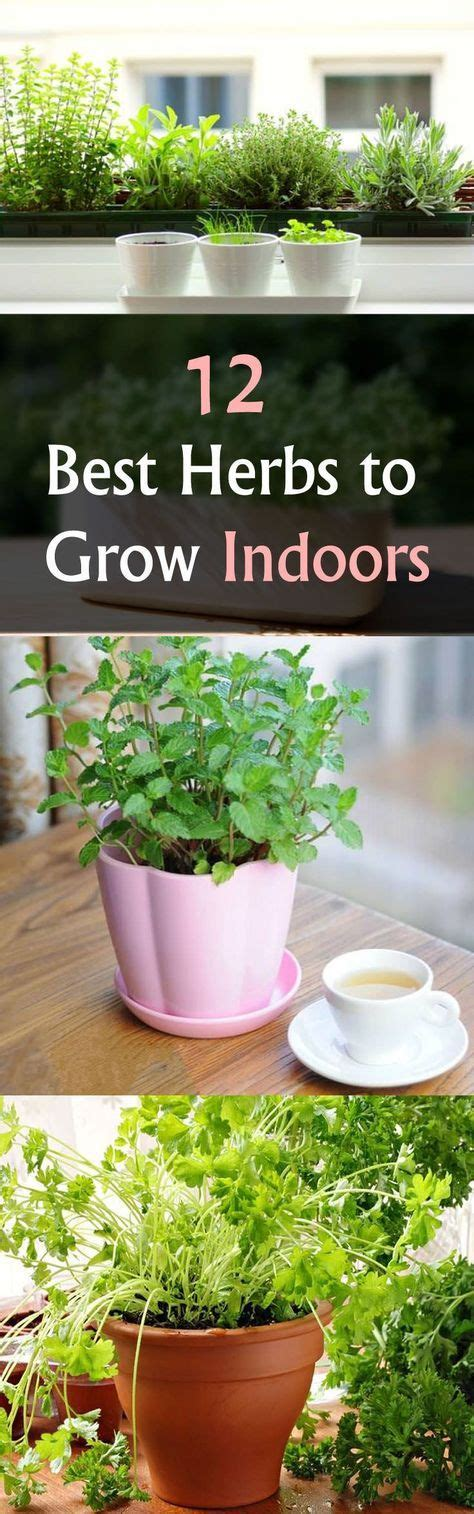 easy herbs to grow inside starting an indoor herb garden find out best herbs to
