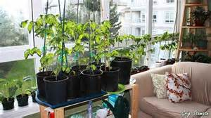 12 ways you can an indoor garden 3 sold me