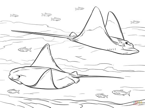 coloring pages sharks and rays cownose and bull eagle rays coloring page free printable