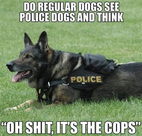 Serious Dog Meme - war service dogs meme my day are funny serious cute on