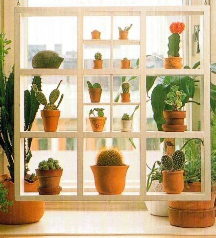 window shelves for plants shelves to house trailing