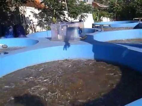 Jual Kolam Terpal Bulat Jakarta info teknologi teknologi bioflok pada budidaya ikan lele