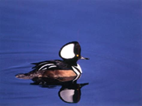boat tours from seattle to san juan islands bird tours birding and birding safaris from friday harbor