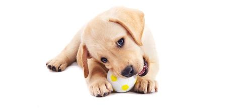 what age to neuter a puppy what is the best age to neuter a