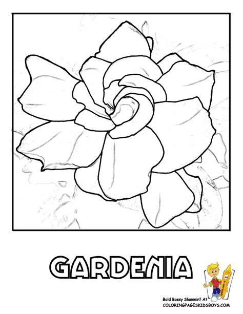 Gardenia Color Gardenia Outline Www Pixshark Images Galleries