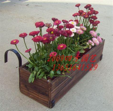 Flower Pot Hangers - best 25 hanging flower pots ideas on potted