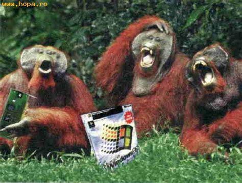 imagenes comicas de monos windows para monos fotos comicas variadas funiacs com