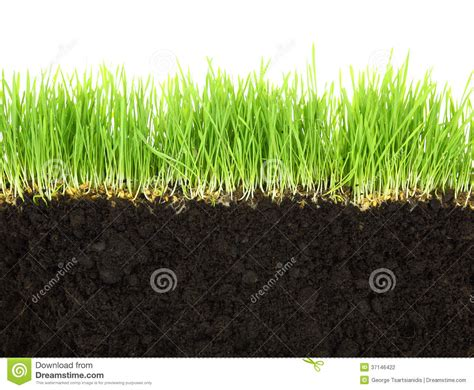 grass section cross section of soil and grass stock photography image
