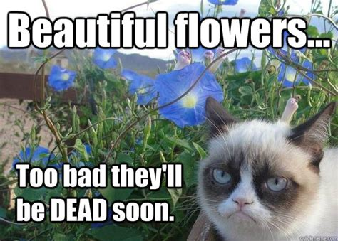 Flower Meme - beautiful flowers too bad they ll be dead soon cheer