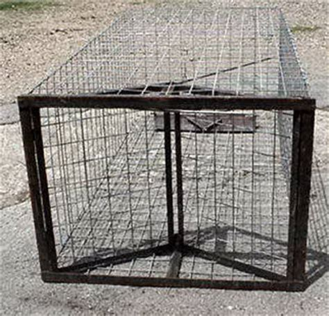 swing door hog trap plans sure trap quot we ve got it to trap it quot
