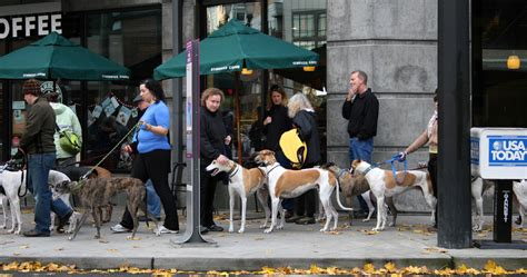 puppies portland oregon top 10 most friendly cities in america cites for