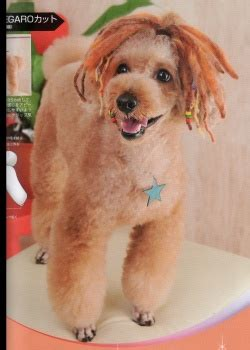 how to do a bob marley poodle cut on a dog huxtable the poodle toy poodle blog parti poodle