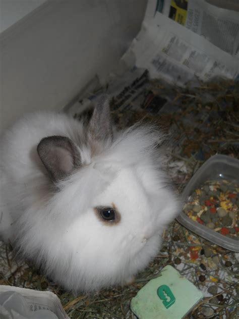 come si chiama la gabbia dei conigli tutto coniglio il mio coniglio neve