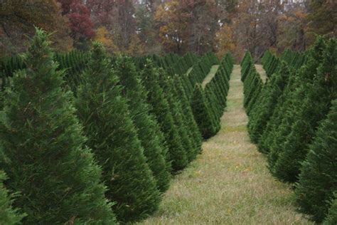 best oregon christmas tree farm tree farm portland oregon beneconnoi