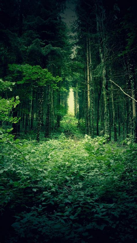 wallpaper of green forest green forest trees best htc one wallpapers