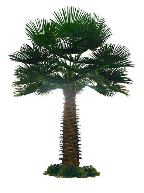 artificial palm tree china artificial palm tree china artificial tree