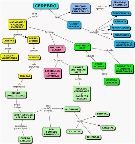 mapa conceptual del sistema nervioso division 4 atv related keywords division 4 atv long tail