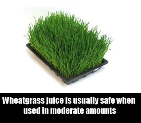 Wheatgrass Detox Side Effects by Home Remedies For Tooth How To Treat Tooth
