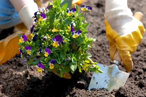 how to plant a flower bed a dementia garden for the soul alzheimer s and dementia