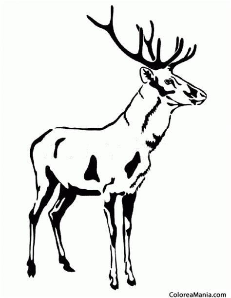 imagenes en blanco ynegro para dibujar colorear ciervo en blanco y negro animales del bosque