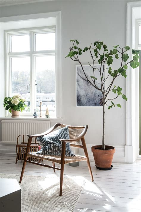 indoor plant options for apartments cozy bliss indoor plants tiny tree wooden arm chair minimalist