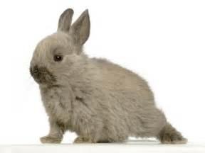 comment nourrir lapin alimentation du lapin