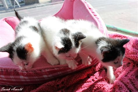 rescued kittens find forever homes oasis animal rescue
