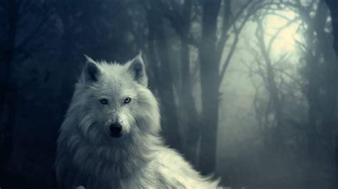 imagenes lobo blanco lobos blancos en hd imagui