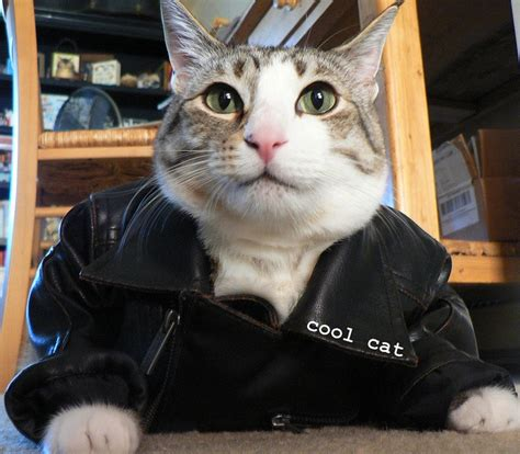 Leather Cats by Cool Cat Pecan In His Leather Jacket Pecan The Nut