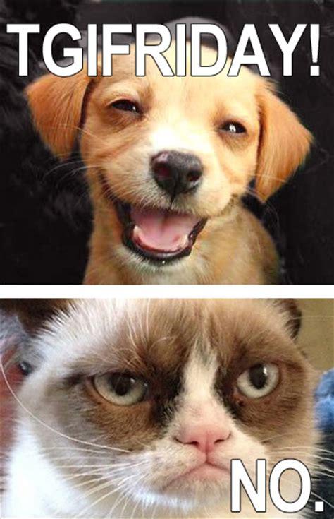Grumpy Cat Friday Meme - grumpy cat tgif