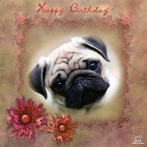 pug birthday cards 19 best images about pug birthday cards on home pug and happy birthday