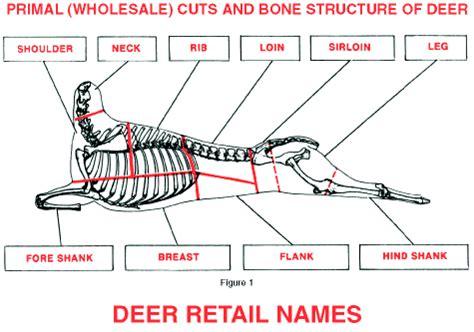 butchering a deer diagram deer cuts