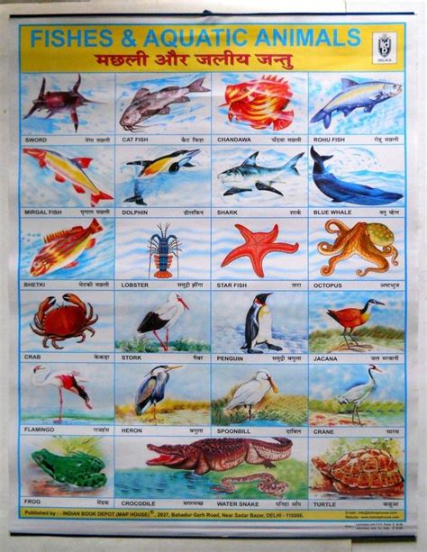 printable fish poster india vintage school chart poster print fishes aquatic