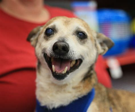senior dogs 4 seniors 9 small dogs looking for forever homes future expat