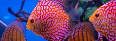 Fish   RSPCA