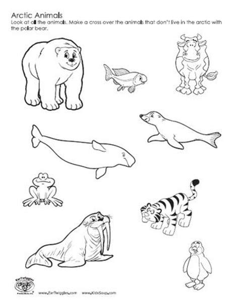 coloring pages arctic animals arctic animals coloring pages printable coloring image