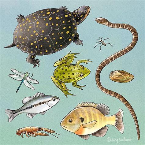 Gartenteich Tiere science portfolio meg sodano illustration design
