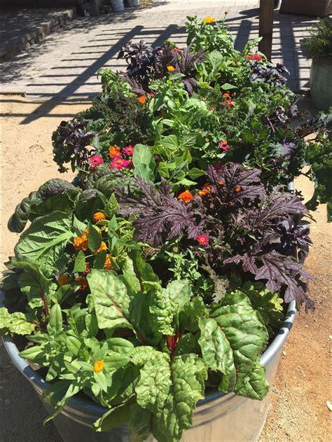 10 Best Images About Vegetables Fruit Herbs On Pinterest Vegetable Gardening Pdf