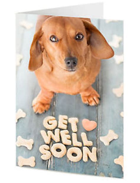 get well soon puppy get well dachshund sausage arranges treats to say get well soon card ebay