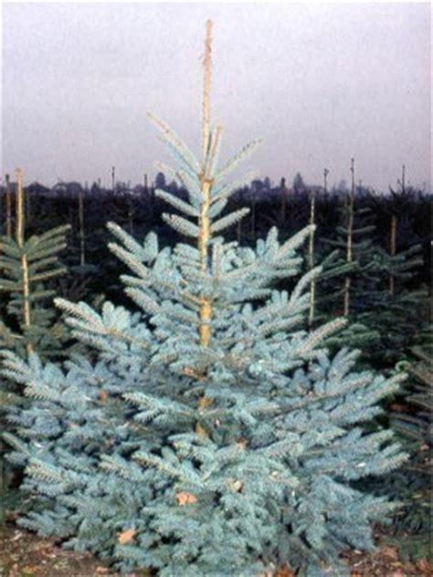weihnachtsbaum lieferservice weihnachtsb 228 ume weihnachtsbaum bonn de ihr