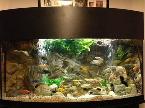 most beautiful freshwater tanks 2013 ratemyfishtank