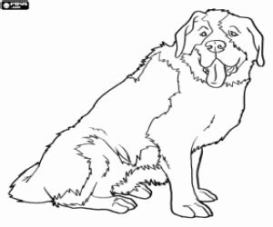 St Bernard A Rescue Dog With The Brandy Barrel Around His St Bernard Coloring Pages