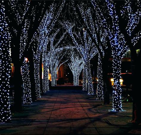 lights for outdoor trees lighting up outdoor trees outdoor lighting ideas