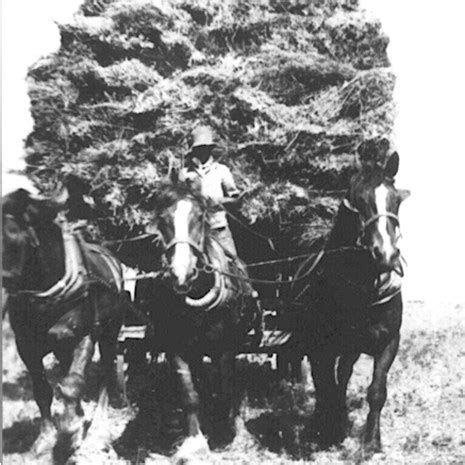 bringing in the sheaves wheat and chaff from my years as a priest books bringing in the sheaves at patho in 1939 patho plains