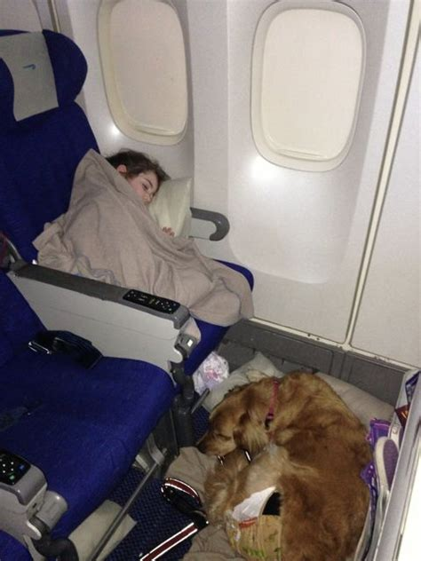 service dogs on planes airplane flights for dogs 2017 ototrends net
